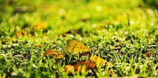 3 urządzenia pomocne w jesiennej pielęgnacji trawnika