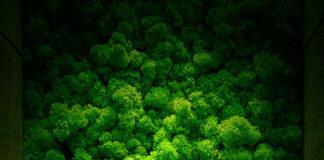 ściany z mchu leśnego