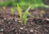 Ochrona plonów przed chorobami od grzybów i pleśnią