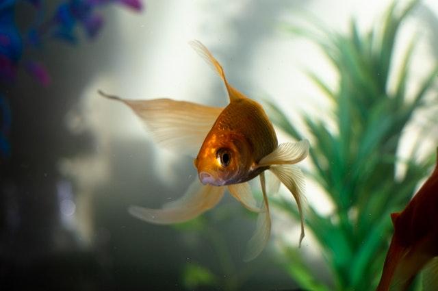 Napowietrzanie akwarium